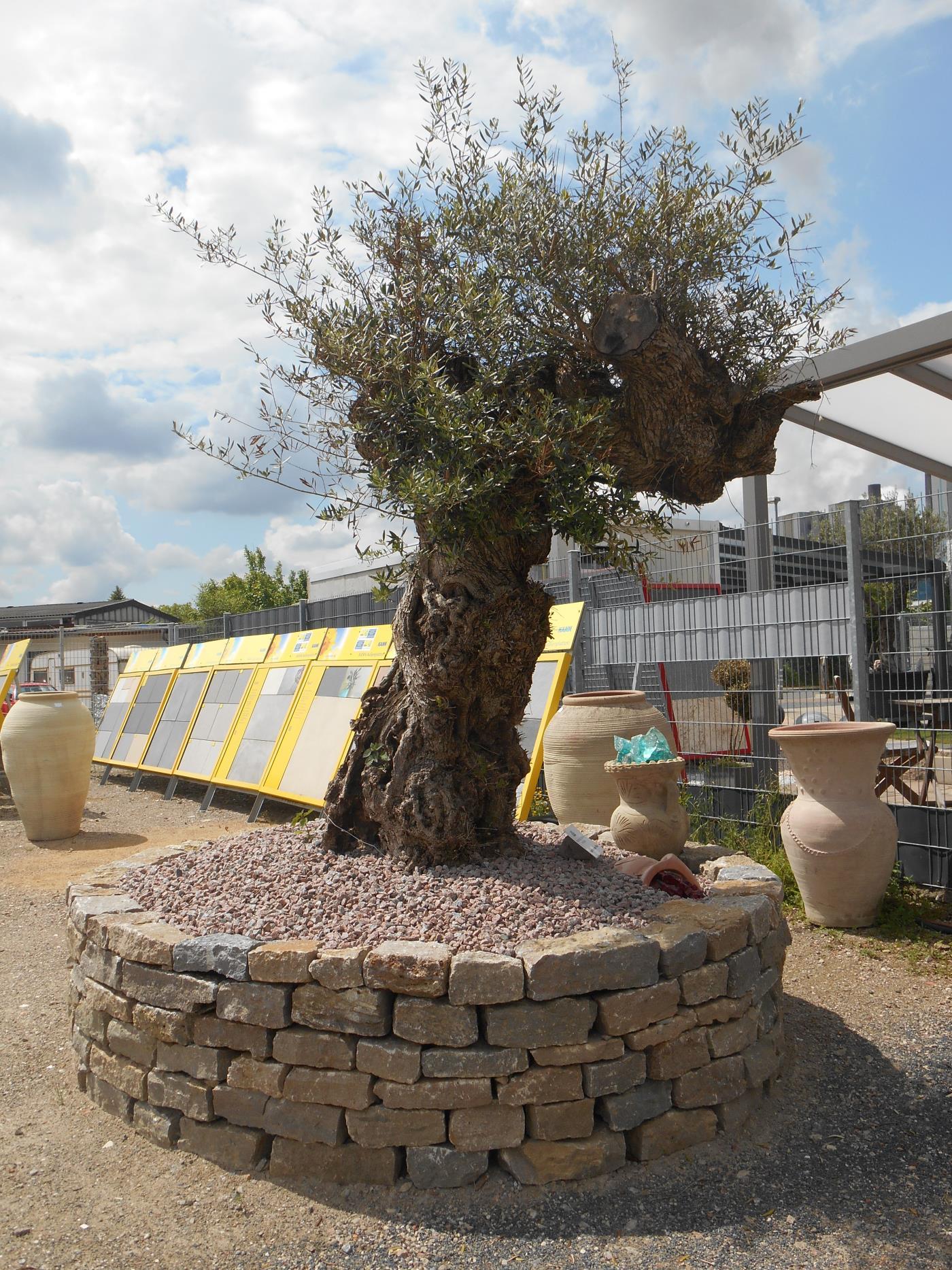 mediterrane pflanzen natursteine dayan. Black Bedroom Furniture Sets. Home Design Ideas